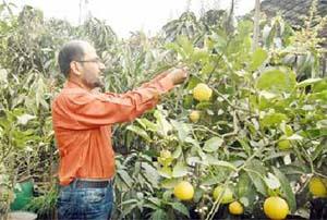 Rooftop gardening growing popular in capital