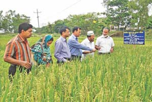 Rice revolution