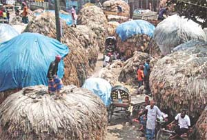 Farmers frown at jute prices