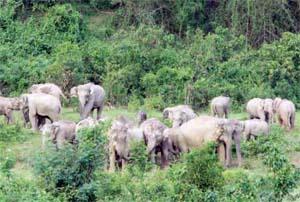 Human-elephant conflict increasing